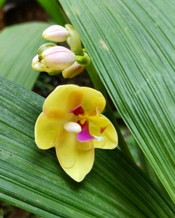 Pretty little things.. ground orchids ge