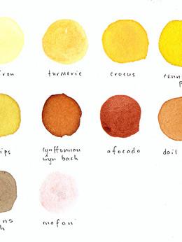 Palet Natur / Nature's Palette