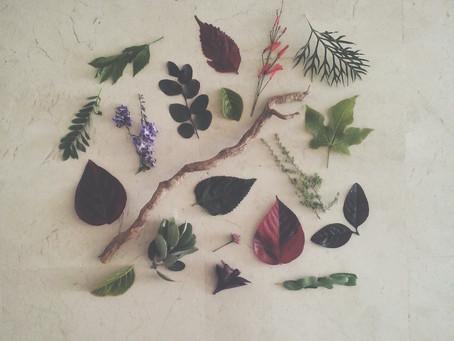 Botanical treasures
