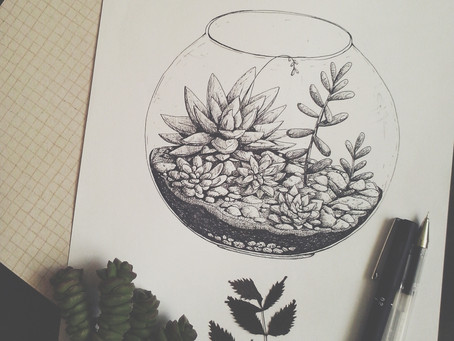 Having fun with succulents