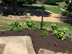 Landscaping Work 1