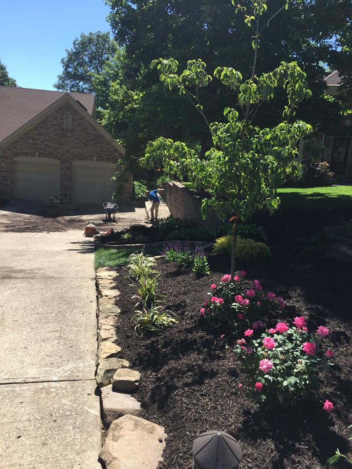 Landscaping Work 7