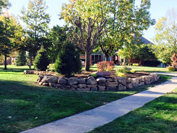 Lots of Norway Spruces & landscaping Work & stone wall 13