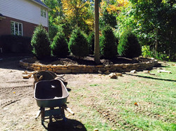 Lots of Norway Spruces & landscaping Work & stone wall 8