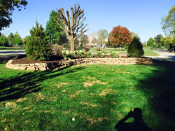 Lots of Norway Spruces & landscaping Work & stone wall 11