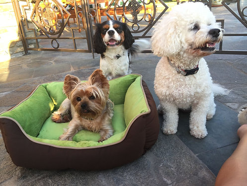 Green doggie bed for a donation  of ....
