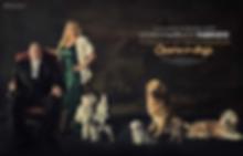VIVIANA FABRIZIO BRUCE FABRIZIO FOUNDERS OF AMORE FOR DOGS FOPUNDATION MOST CELEBR