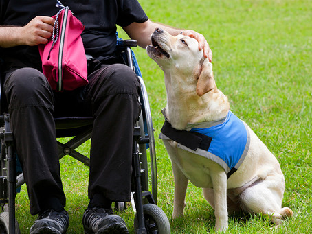 Service Dogs in a business: Rights and responsibilities of service dog handlers