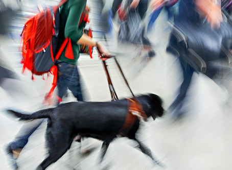 Customers with Service Dogs: Rights and responsibilities of a business owner