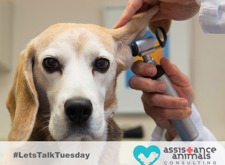 Assistance animals and zoonotic disease risk
