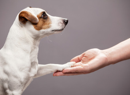 3 important reasons to partner with a veterinarian when selecting an assistance animal trainer