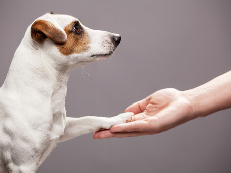 Temperament testing is a critical step when prescribing an assistance animal