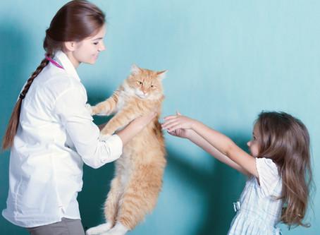 A working animal's health and wellness is vital