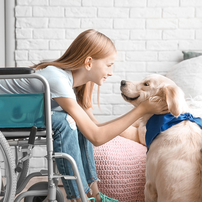 Service Dog with Child in Wheelchair