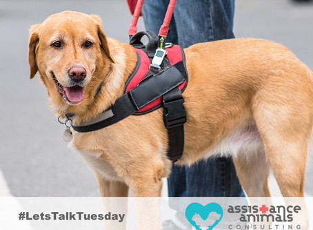 3 steps to improving outcomes of patients with assistance animals