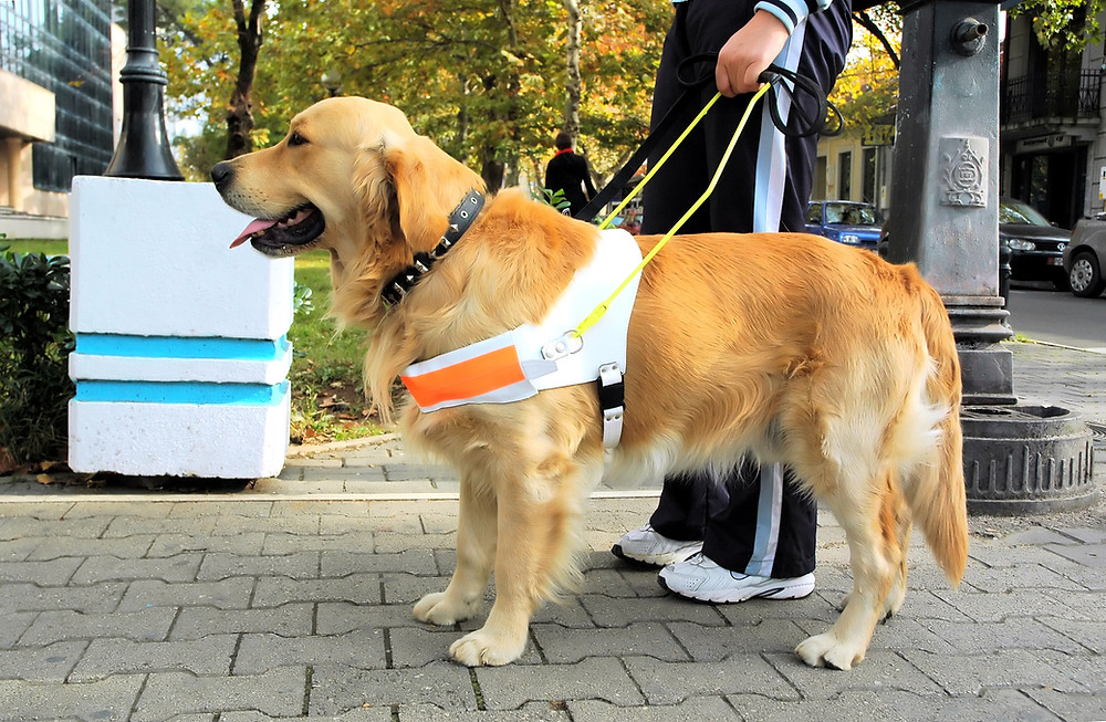 disruptive behaviors of a service dog