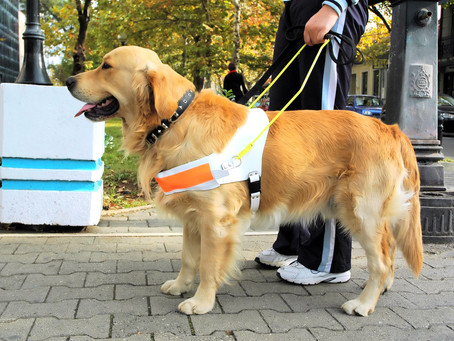 A review of disruptive behaviors of service dogs
