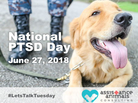 Collaborating to support individuals using PTSD service dogs