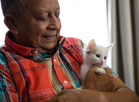 Do you prescribe assistance animals for your patients?