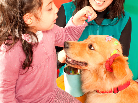 Animal Welfare for therapy animals in educational settings