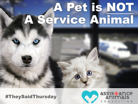 Misrepresenting pets as service animals is fraud