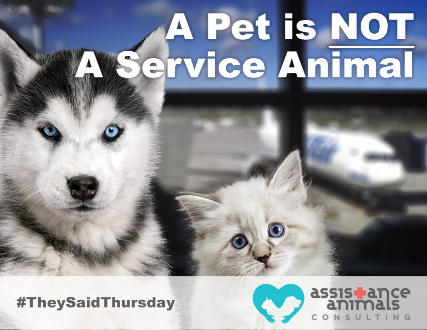 A pet is not a service animal