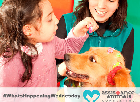 Therapy dogs effective in reducing symptoms of ADHD