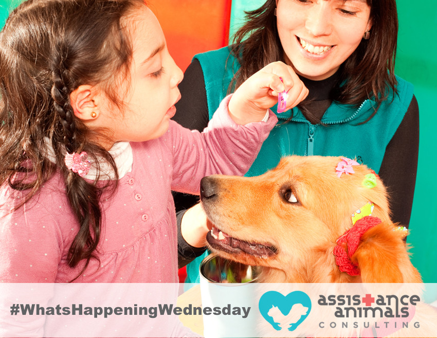 Therapy Dogs effective in reducing symptoms of ADHD in children
