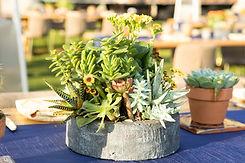 Eventis Succulents