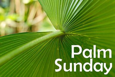 palm_5650c.jpg