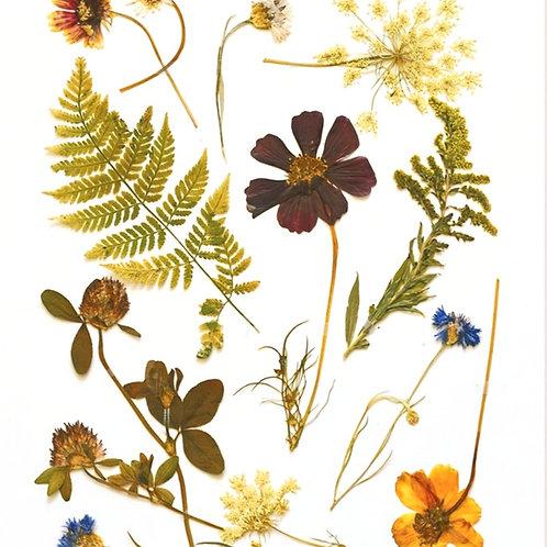Pressed Wildflower Art Print, 8 x 10