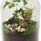 Thumbnail: DIY Terrarium Kit