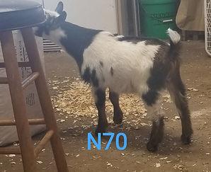 N70.jpg