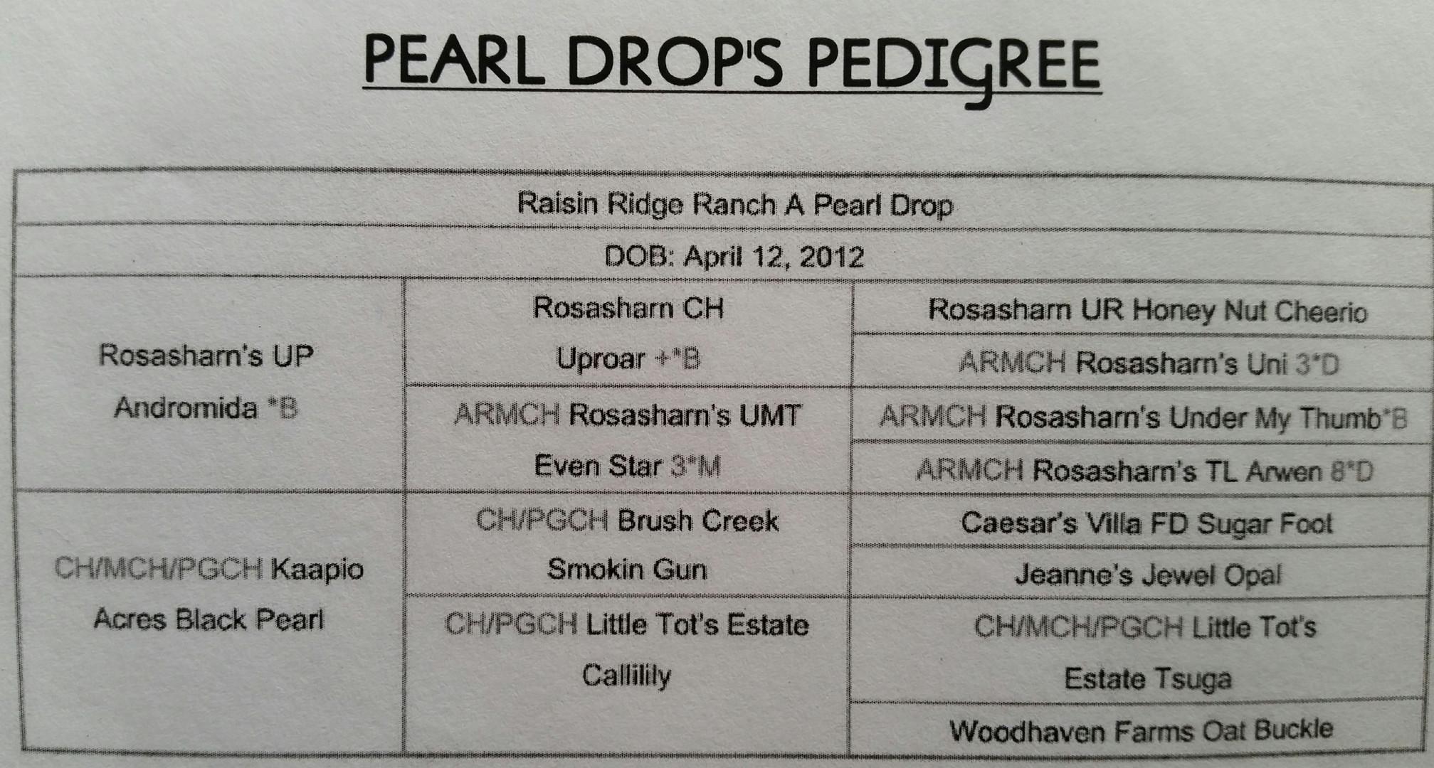 pearl drop pedigree.jpg