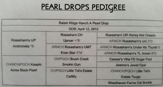 pearl drop pedigree.jpg