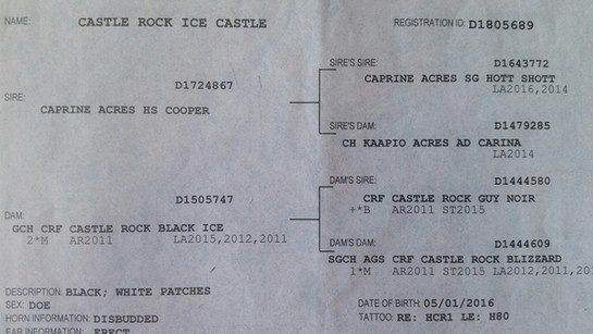 ice castle pedigree.jpg