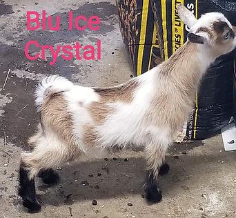 ice crystal 2020.jpg