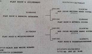 FLAT ROCKS SILVERADO.jpg