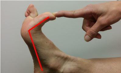 Normal Toe Extension