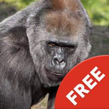 Composition Gorilla