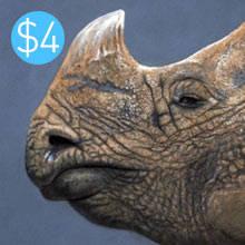 Rhino Pastel Texture