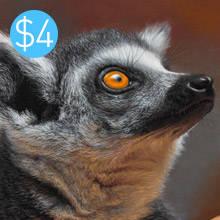 Lemur Pastel 2021