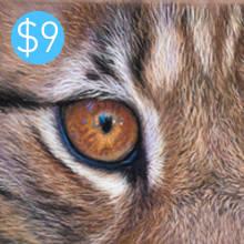 Lynx pastel