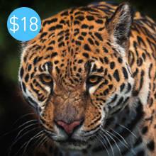 Pastel Jaguar