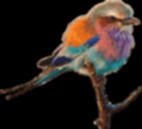 bird-1299232_1280.png