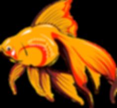 goldfish-24454_1280.png