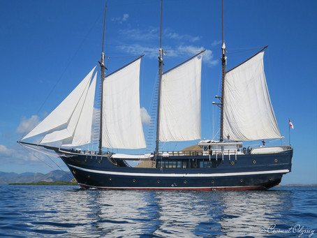Dewi Nusantara |                             The World's Best Liveaboard