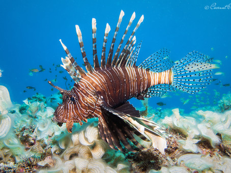 Why Scuba Dive In Mauritius