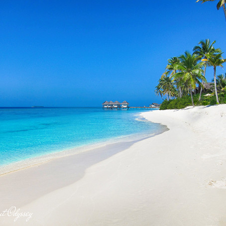 Explore The Maldives | Diving, Relaxation & The Ultimate Paradise