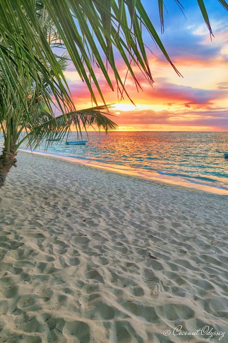 Sunset with lush green palm tree and sandy beach. Dinarobin Beachcomber, Mauritius